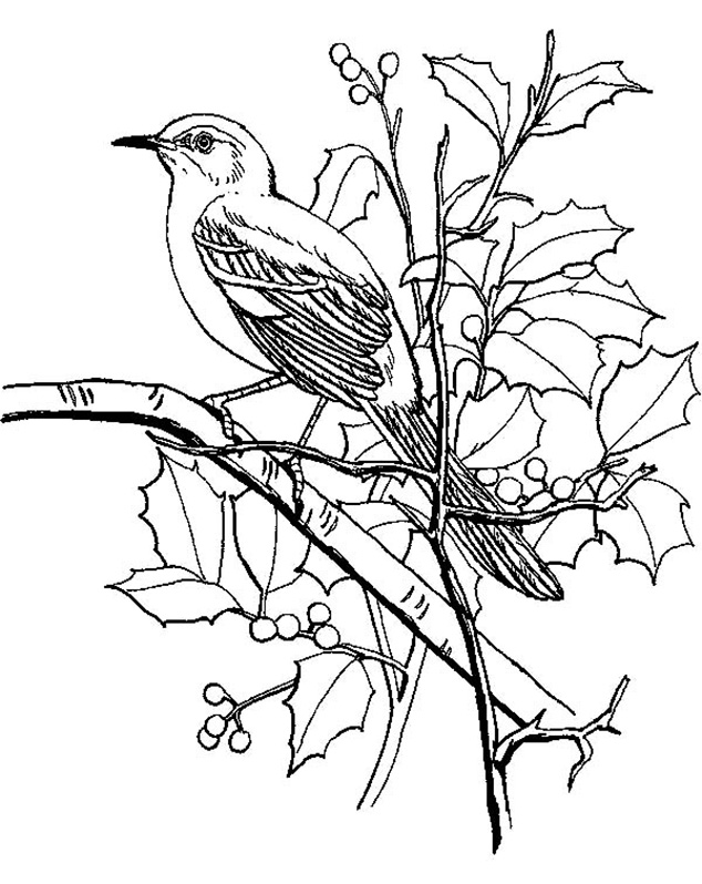 Perching Mockingbird Coloring Pages