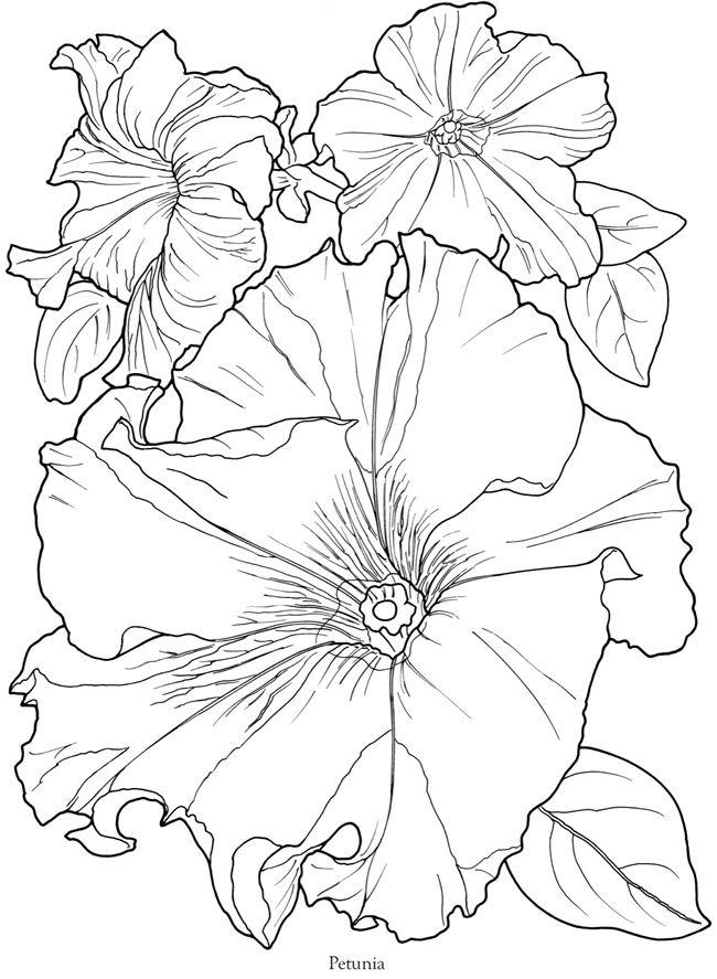 Petunia Printable Coloring Page