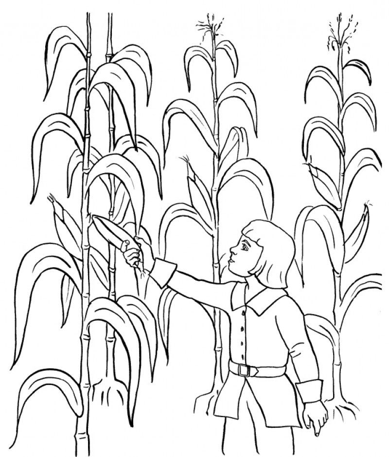 Picking Corn Coloring Page