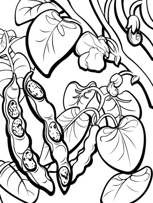 Pinto Beans Coloring Page