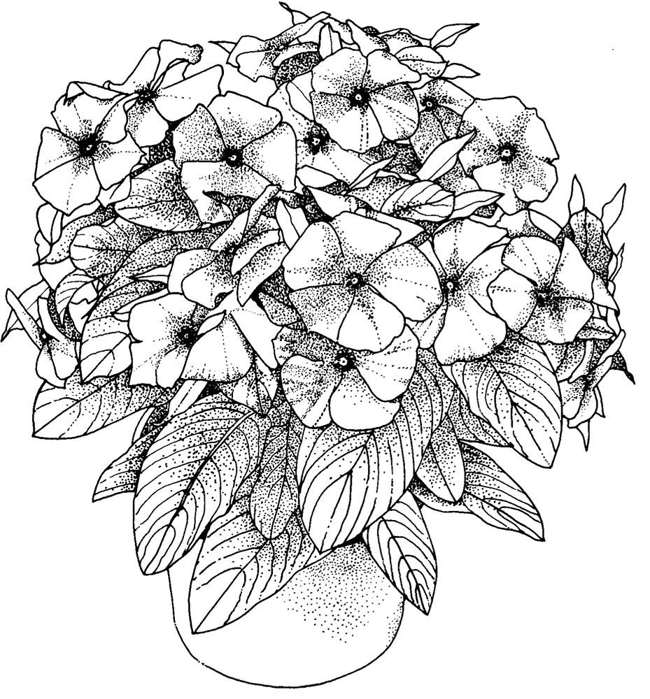 Potted Petunias Coloring Page