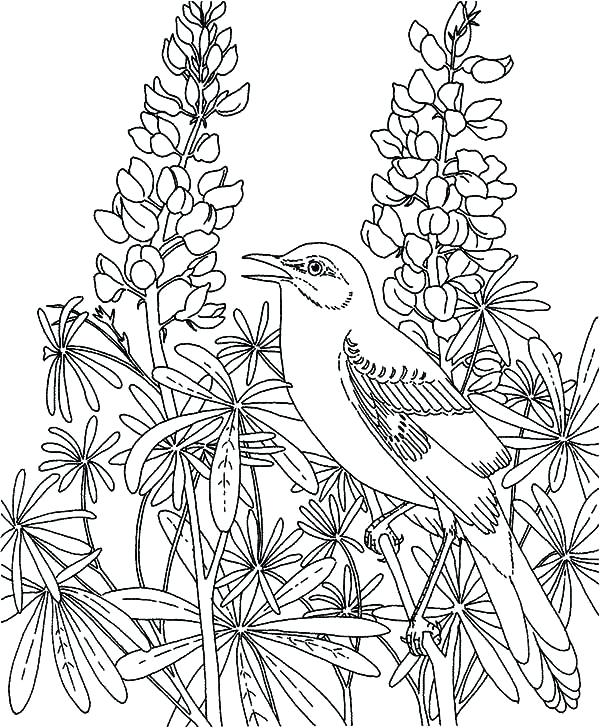 Pretty Mockingbird Coloring Pages