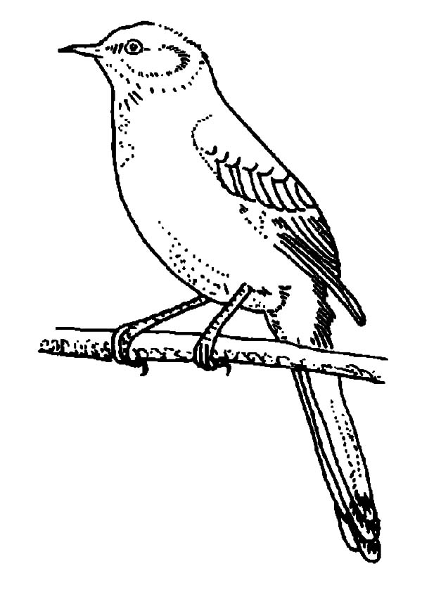 Printable Mockingbird Coloring Pages