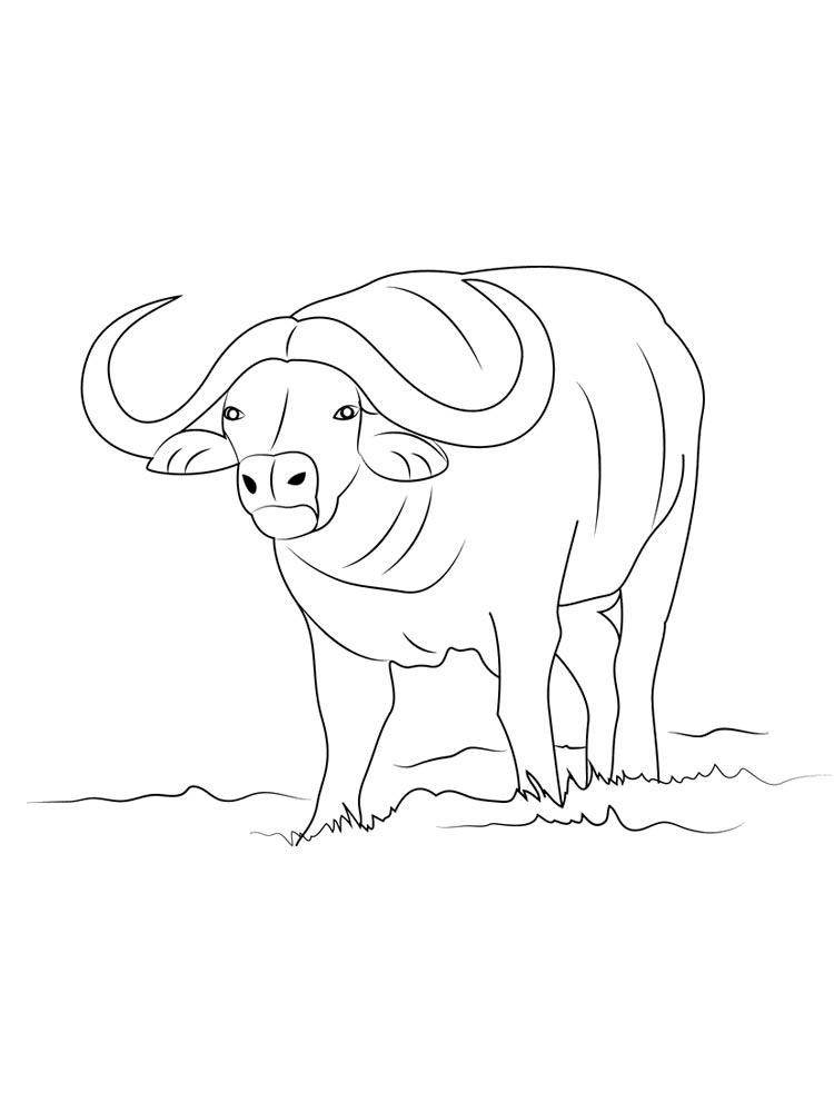 Realistic Buffalo Coloring Page
