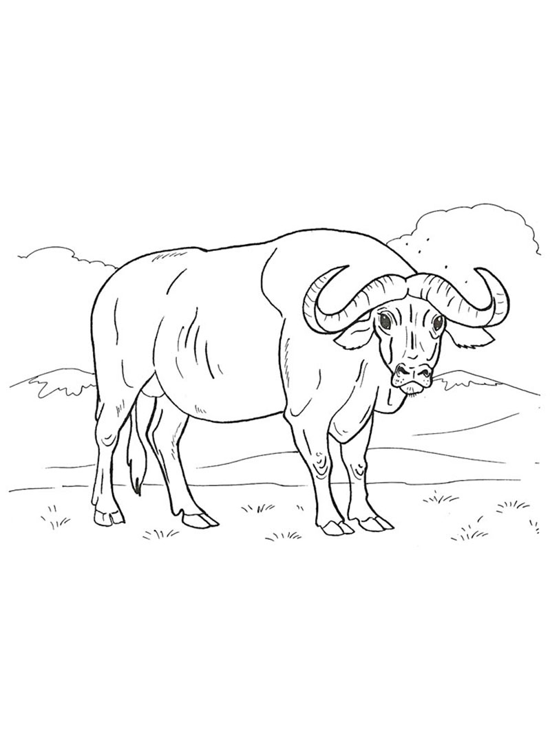Realistic Buffalo Coloring Pages