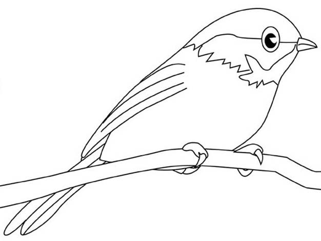 Simple Chickadee Coloring Page