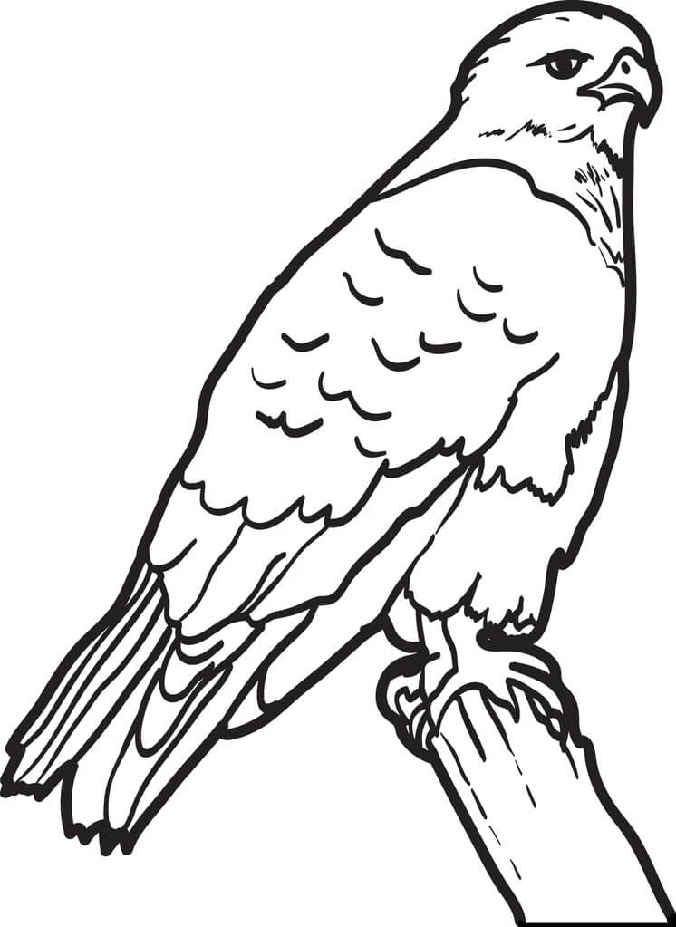 Simple Hawk Coloring Pages