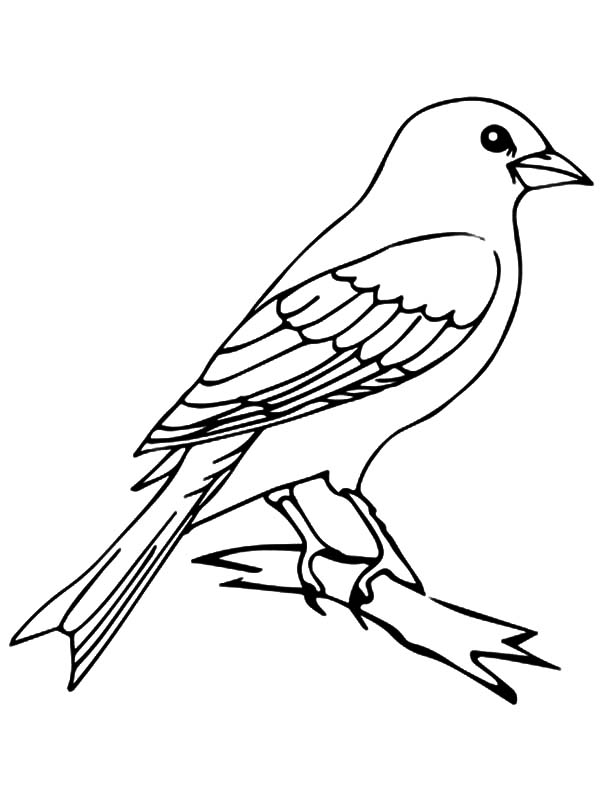 Simple Mockingbird Coloring Pages