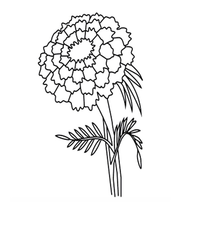 Single Marigold Flower Coloring Pages