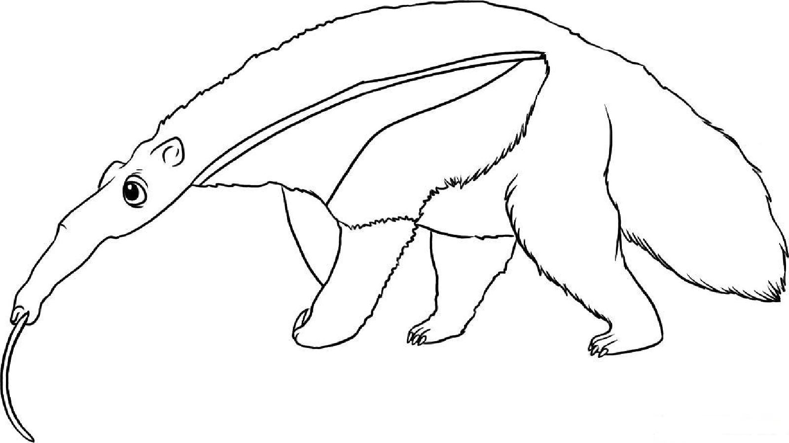 Anteater Eating Ants Coloring Page