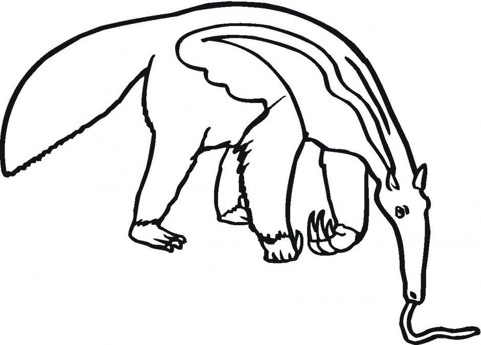 Anteater Eating Coloring Pages