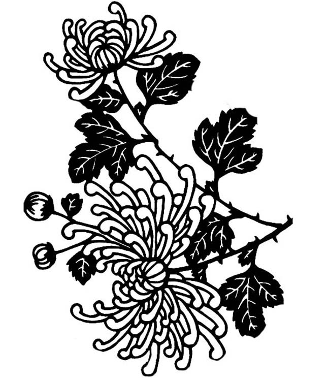 Chrysanthemum Coloring Pages