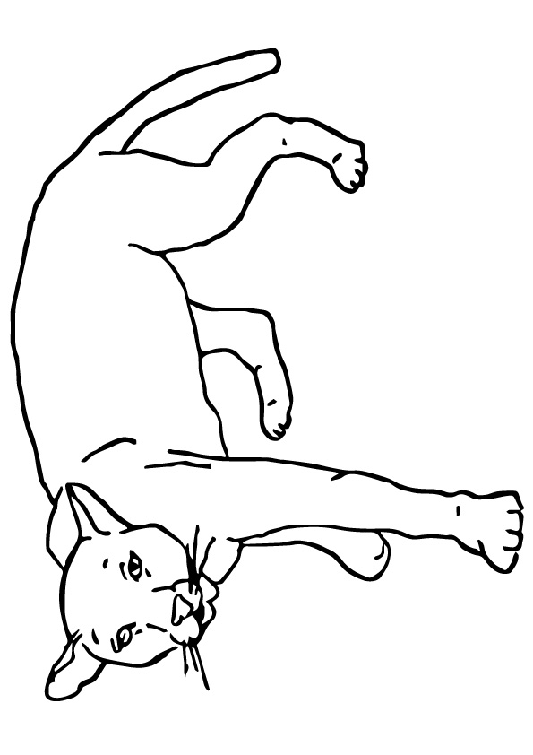 Cougar Coloring Pages