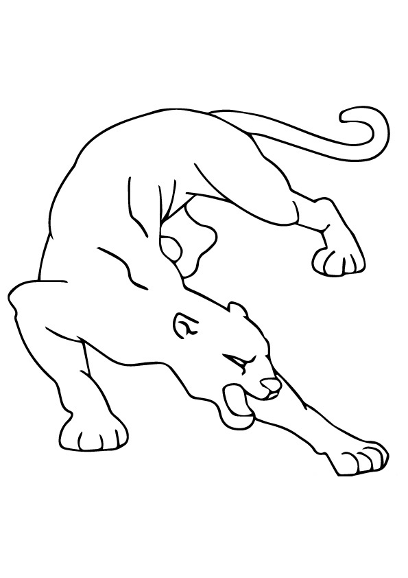 Cougar Fighting Coloring Page