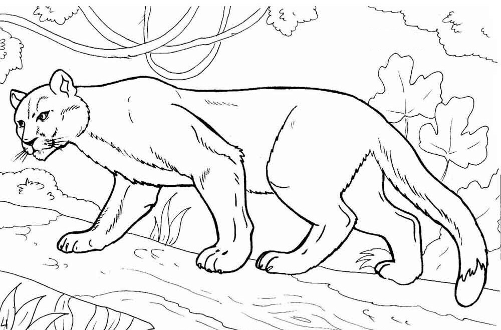 Cougar In A Tree Coloring Pages