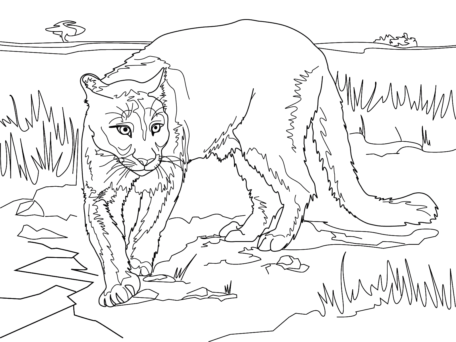 Cougar In The Wild Coloring Pages