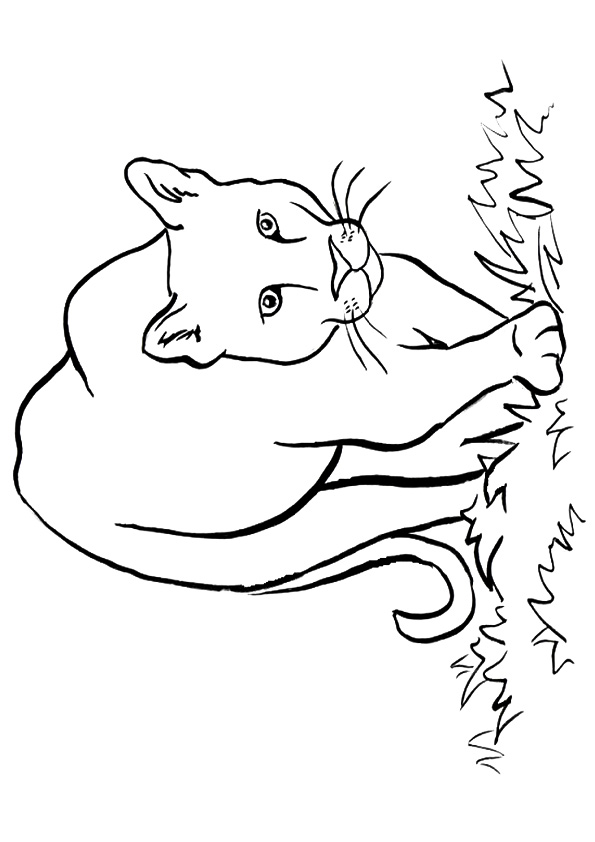 Cougar On The Prowl Coloring Page