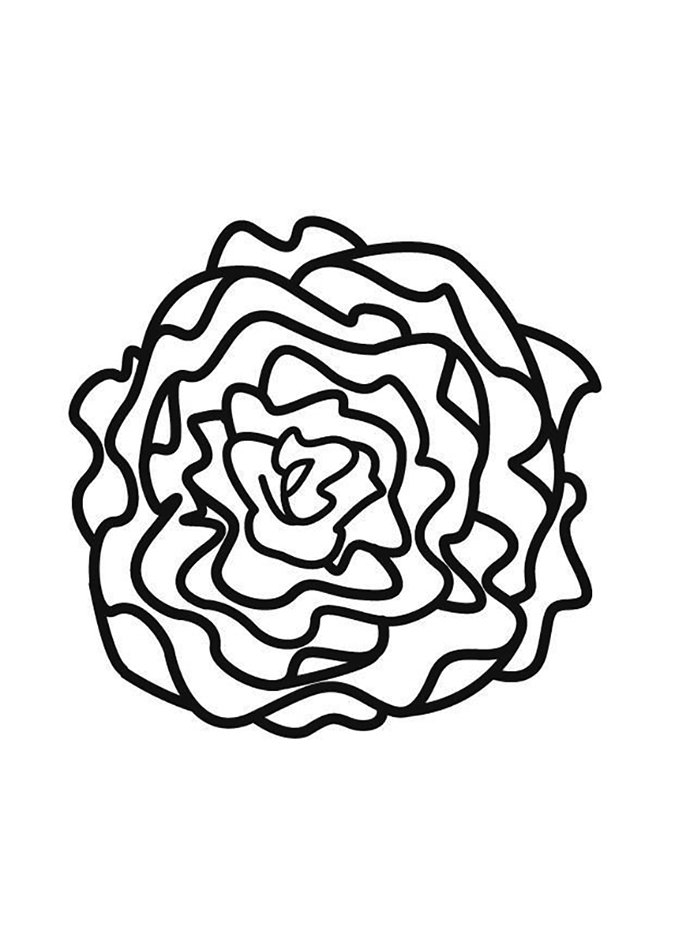 Easy Lettuce Coloring Page