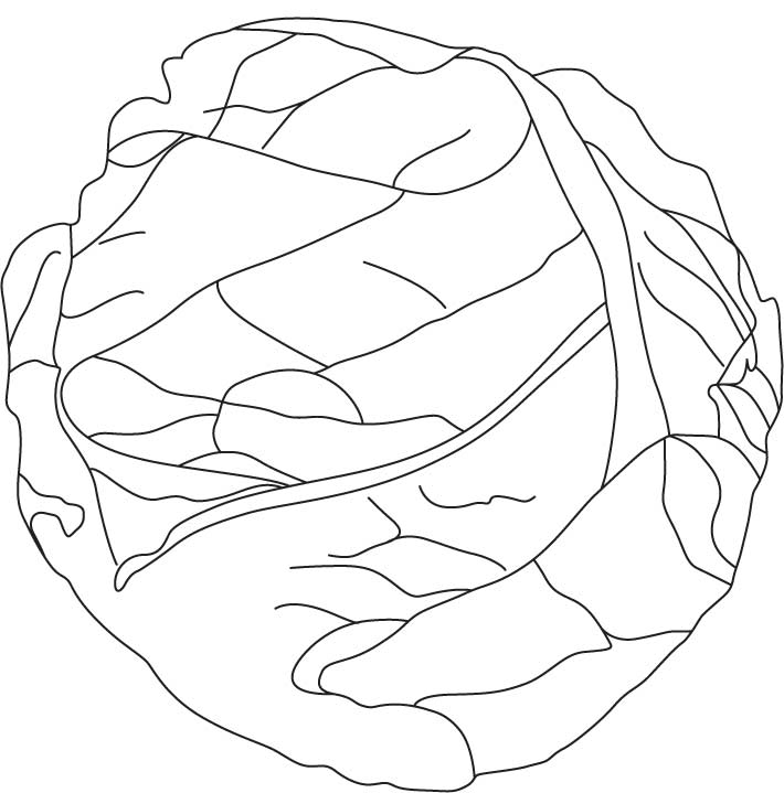 Head Of Iceburg Lettuce Coloring Page