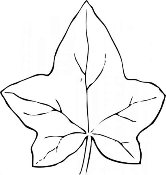 Ivy Leaf Coloring Pages