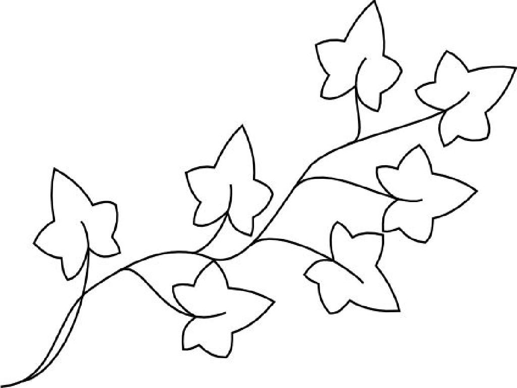 Ivy Plant Coloring Pages