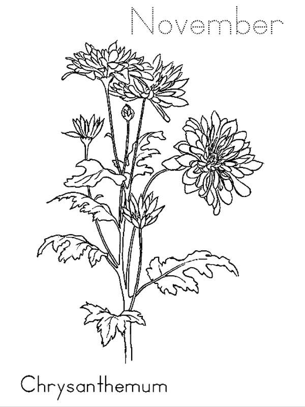 November Chrysanthemum Coloring Pages