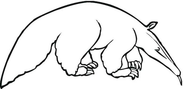 Printable Anteater Coloring Pages