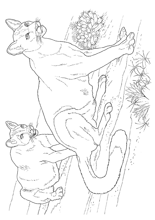 Realistic Cougar Coloring Pages