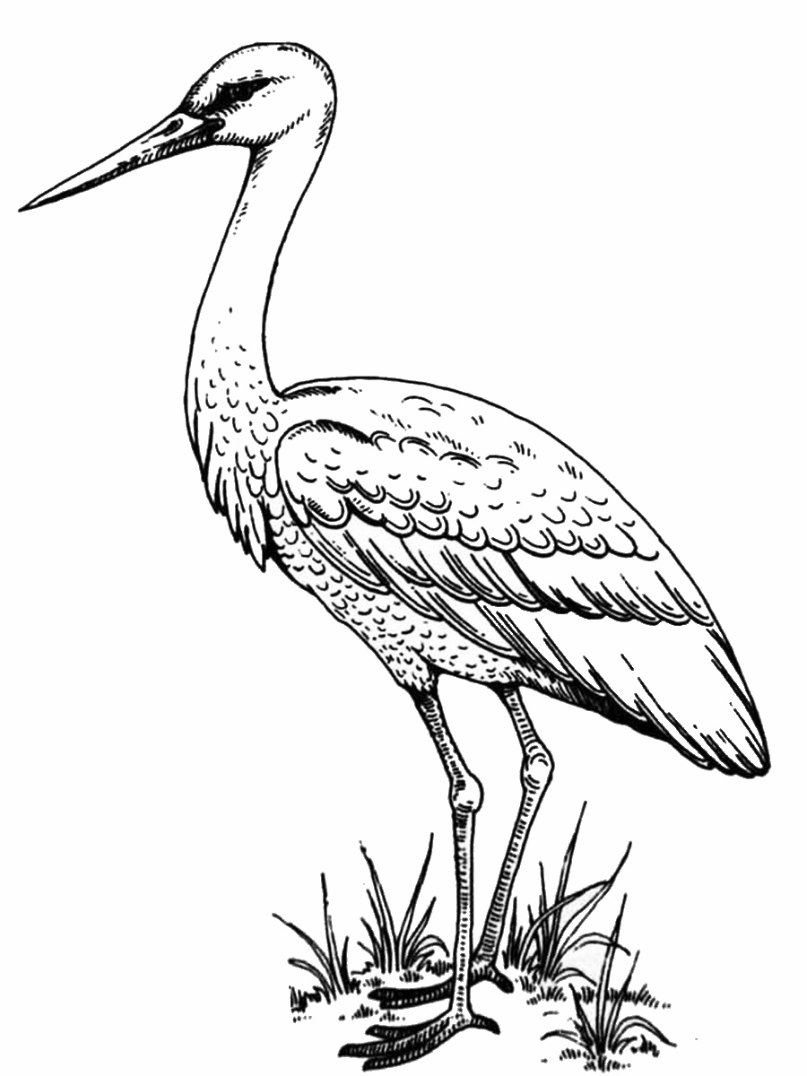 Realistic Stork Coloring Page