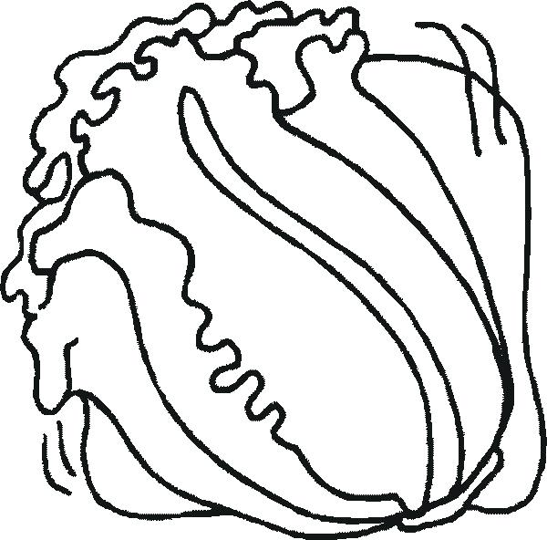 Romaine Lettuce Coloring Pages