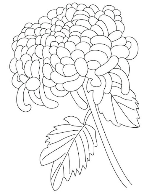 Single Chrysanthemum Coloring Pages