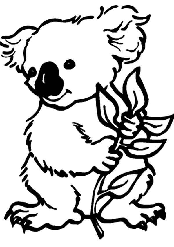 Sweet Koala Bear Coloring Page