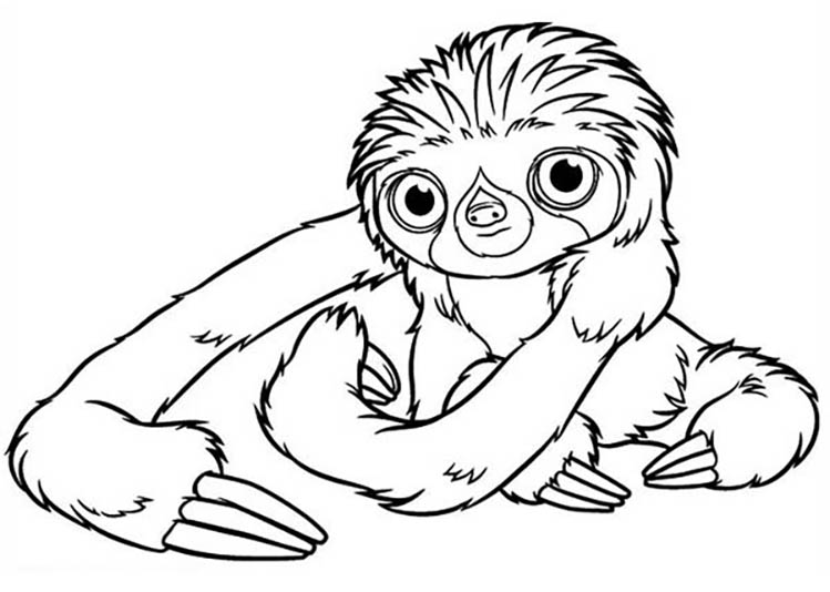 Adorable Sloth Coloring Pages