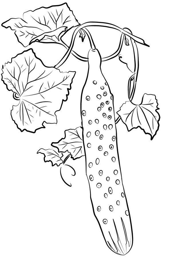 Cucumber On The Vine Coloring Pages