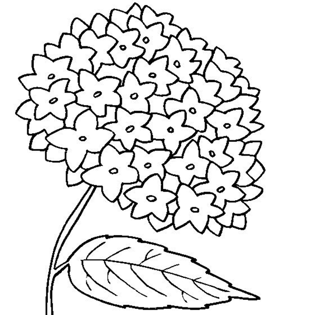 Easy Hydrangea Flower Coloring Page