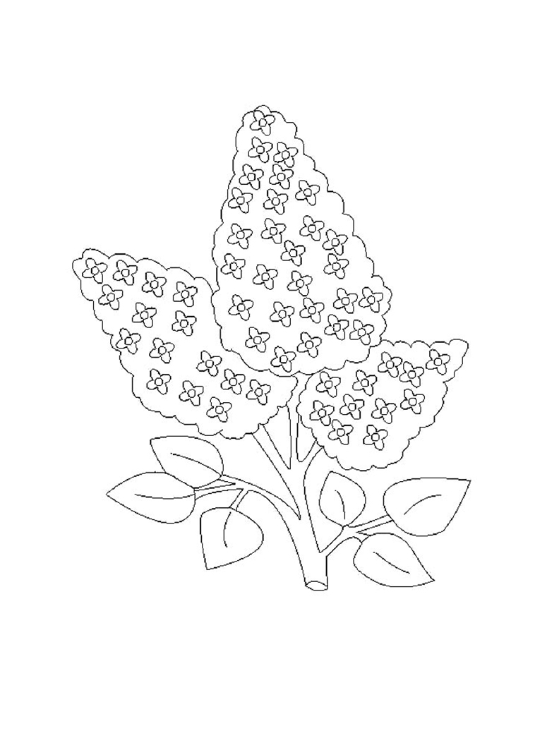 Easy Lilac Flowers Coloring Page