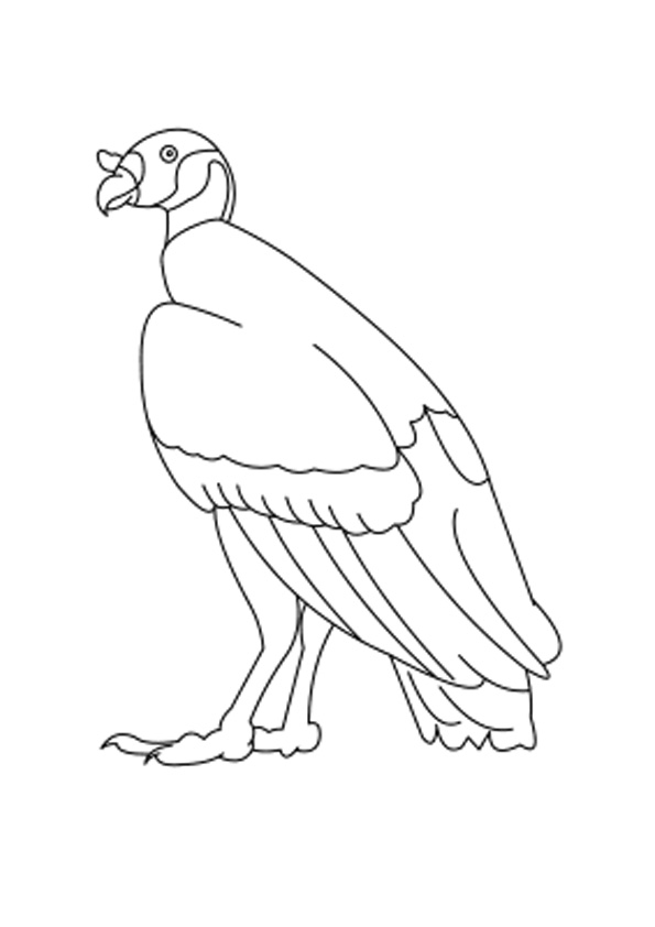 Easy Vulture Coloring Pages