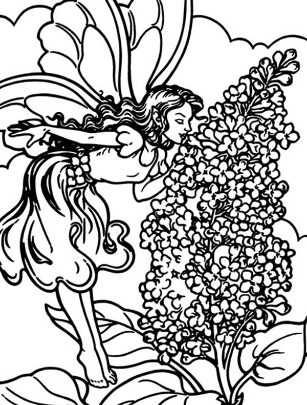 Lilac Fairy Coloring Pages
