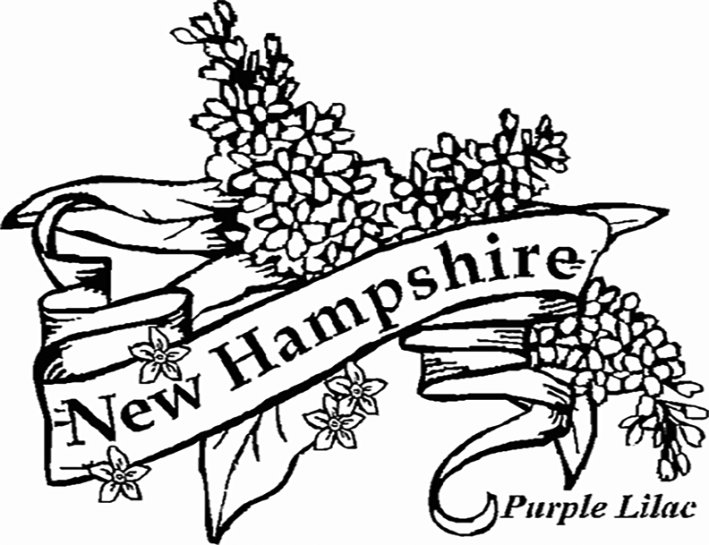 New Hampshire Purple Lilac Coloring Page