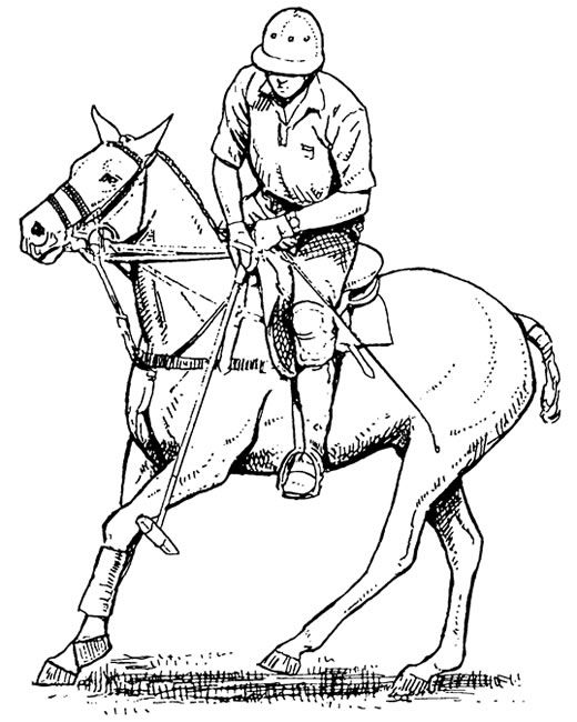 Polo Sport Coloring Pages