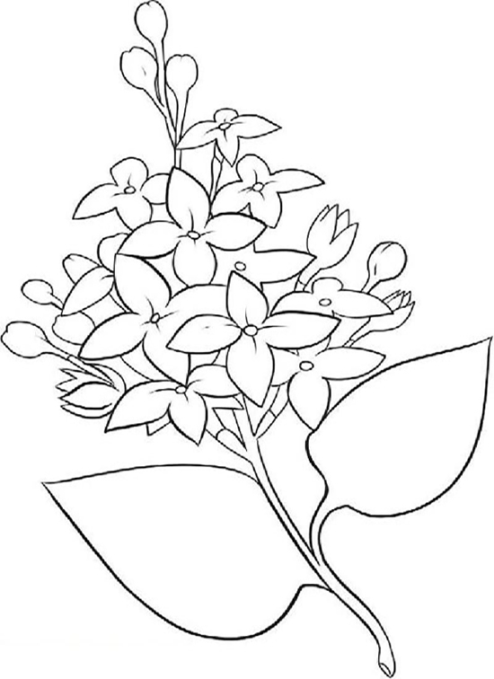 Pretty Lilac Flower Coloring Page
