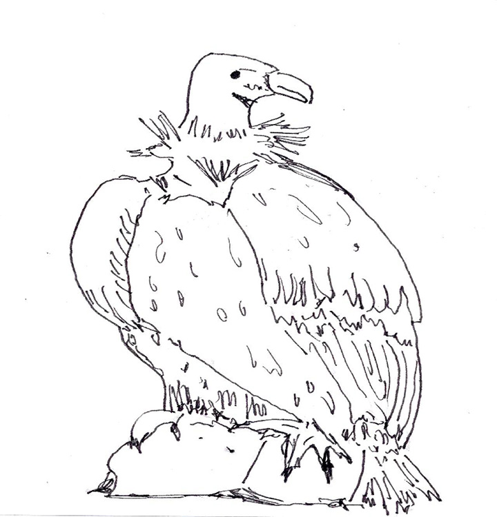 Realistic Vulture Coloring Page