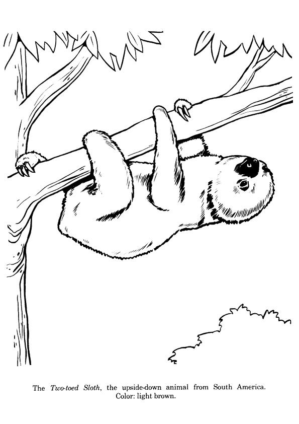 Sloth Coloring Sheet