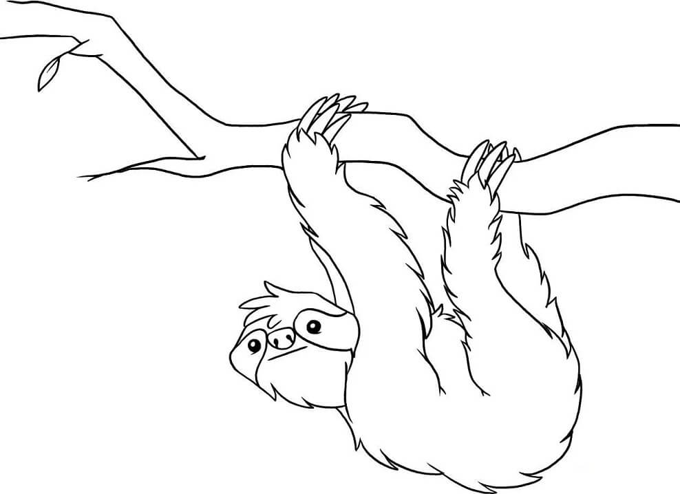 Sloth Hanging Coloring Page