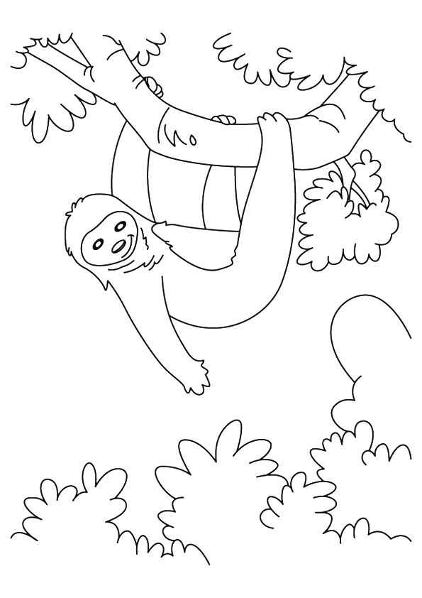 Sloth Hanging In A Tree Coloring Pages