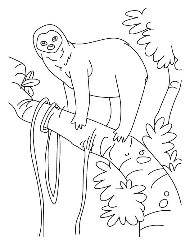 Sloth Printable Coloring Pages