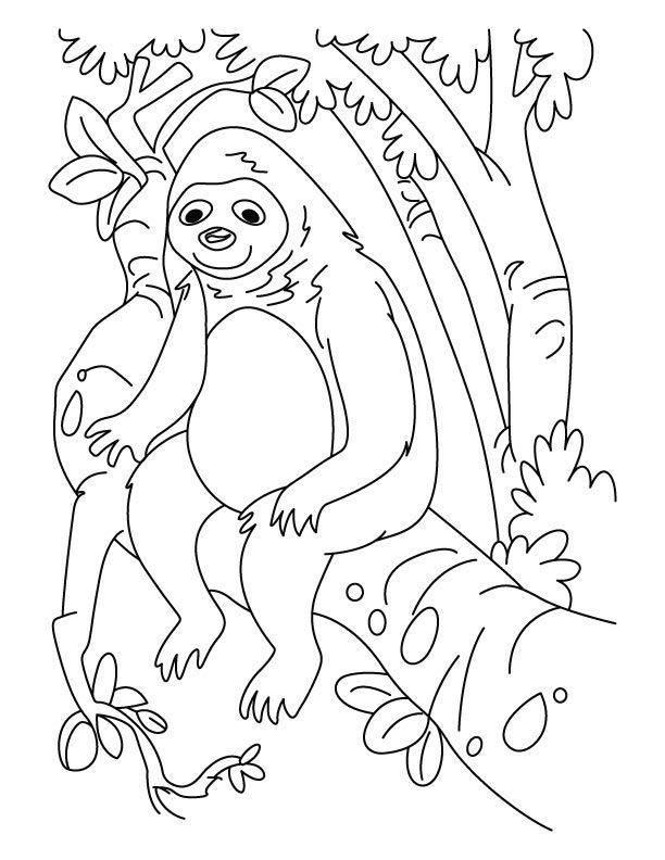 Sloth Sitting In Tree Coloring Pages