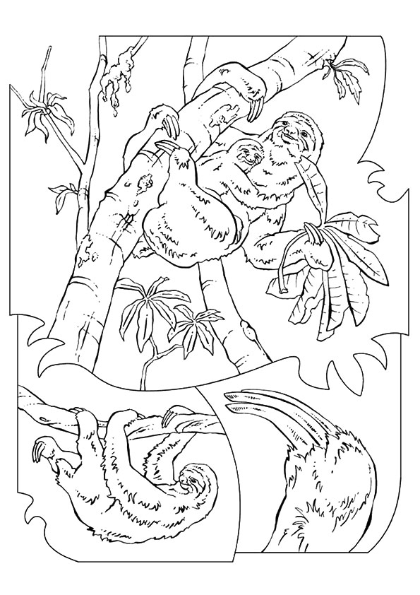 Sloth In A Tree Coloring Pages
