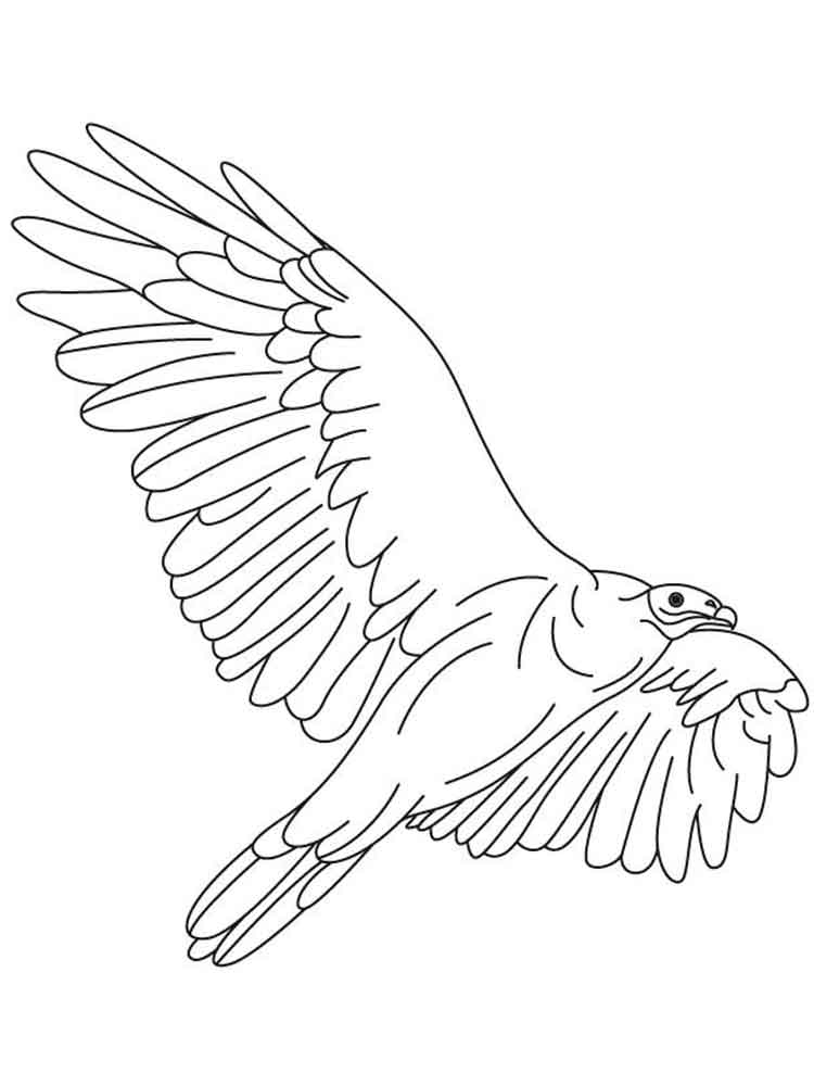 Vulture Bird Coloring Pages