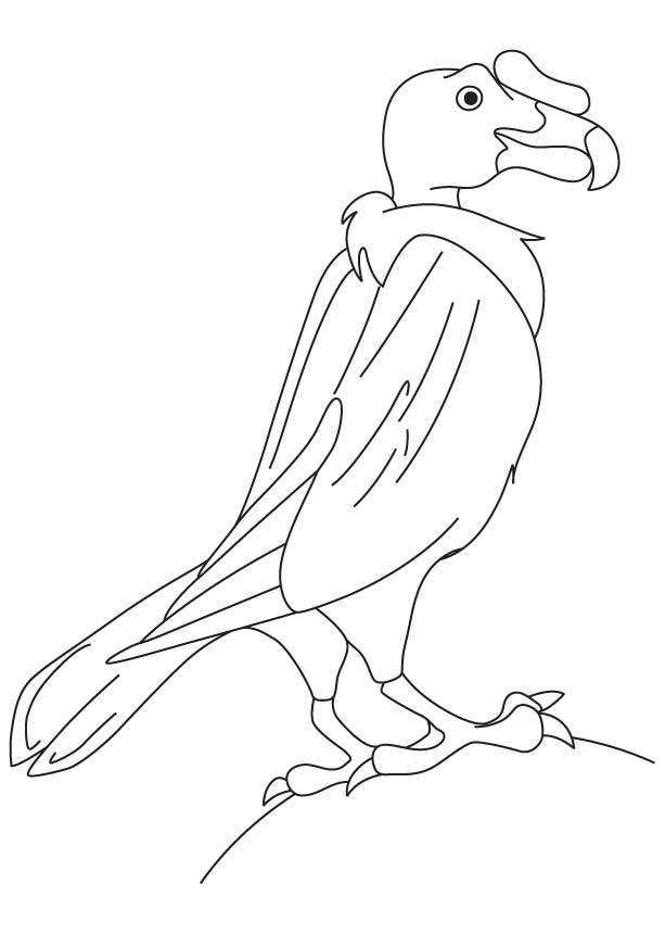 Vulture Printable Coloring Page